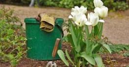 Reinigung des Gartens