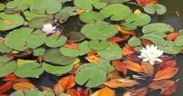 Laub im Teich