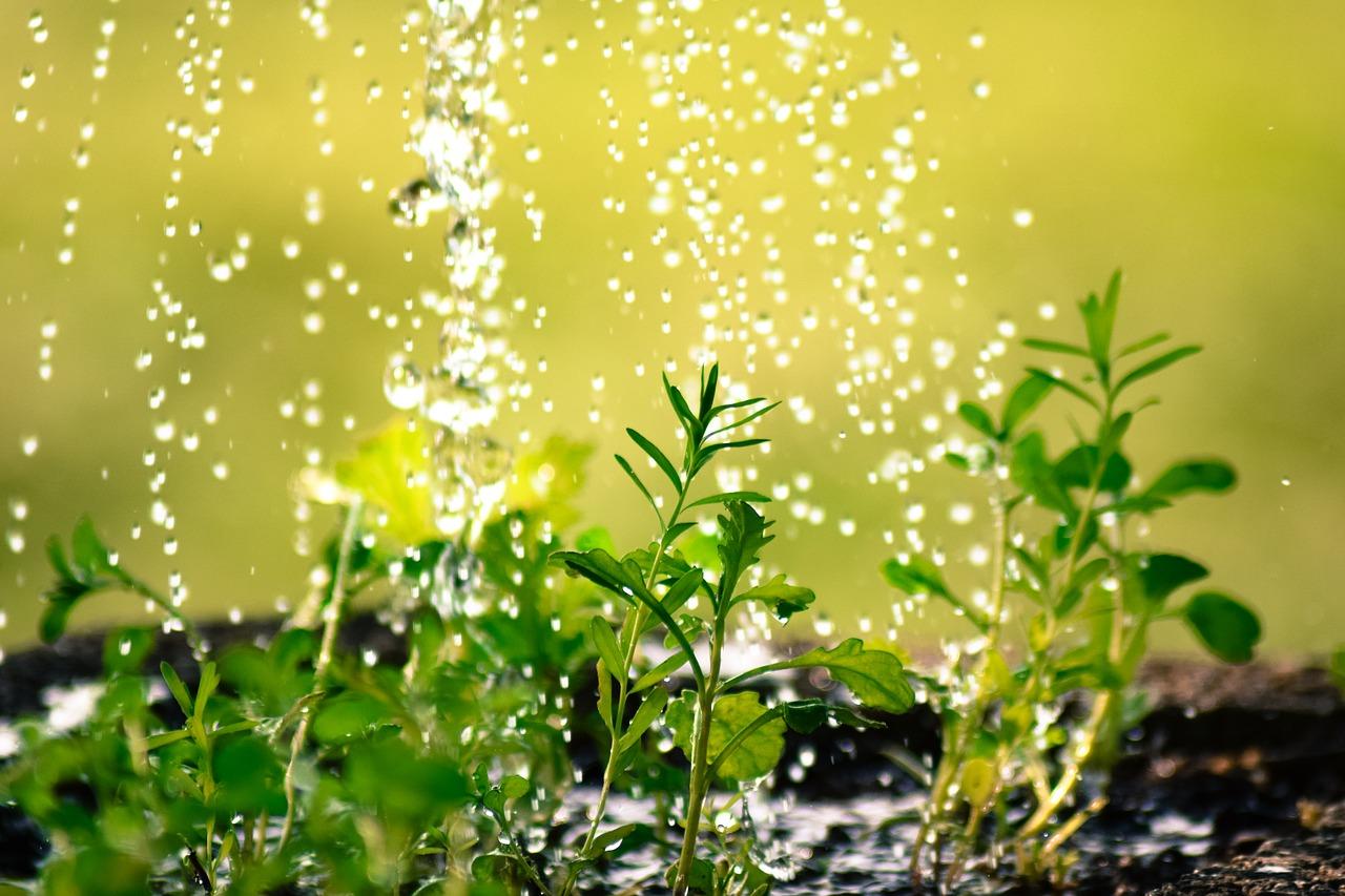 Gartenpumpe Test & Vergleich
