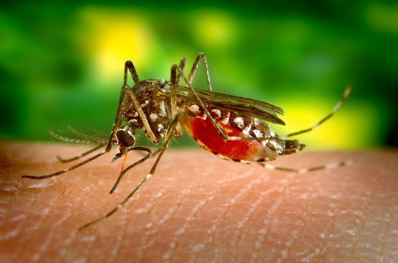 Mücken am Gartenteich