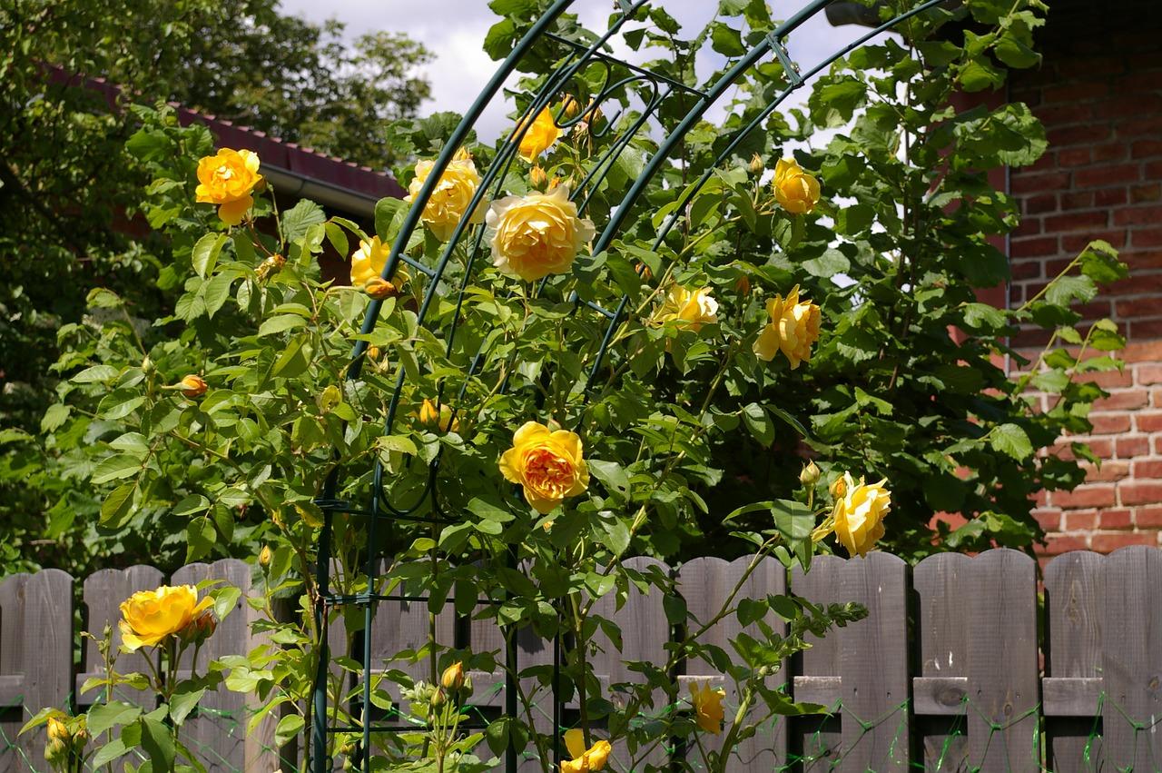 Den Garten mit einem Rosenbogen verschönen