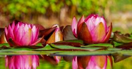 Wasserpflanzen im Teich