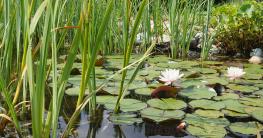 Reinigung und Pflege der Teichpumpe