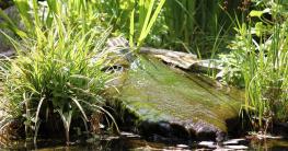 Mittel gegen Fadenalgen im Teich