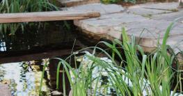 Gartenpflege am Teichrand