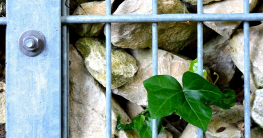 Gabionenzaun im Garten