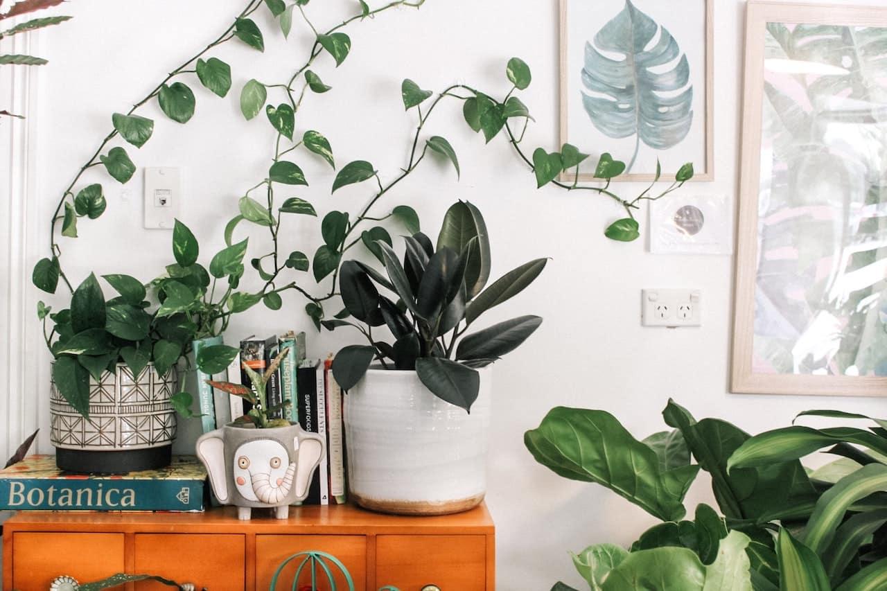 Pflanzen pflegen